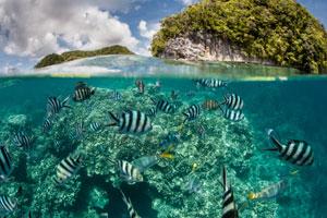 marine-coast