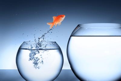 fish-jumping-into-bigger-bowl-masters-degree